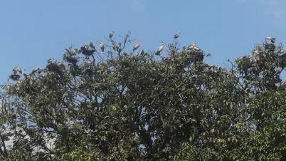 পাখির অভয়াশ্রম বাঘা খোর্দ্দ বাউসার আমবাগান