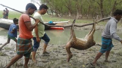 ফাঁদ-দা-চুলাসহ ৬০ হরিণ শিকারি আটক