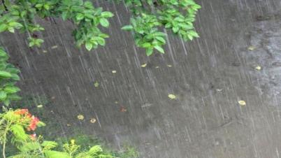 বৃষ্টির প্রভাব: ২-৩ দিন পরেই নামবে শীত