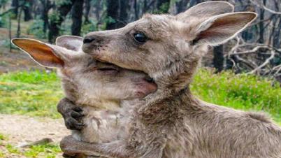অস্ট্রেলিয়ায় দাবানলে ৩০০ কোটি প্রাণী মারা গেছে